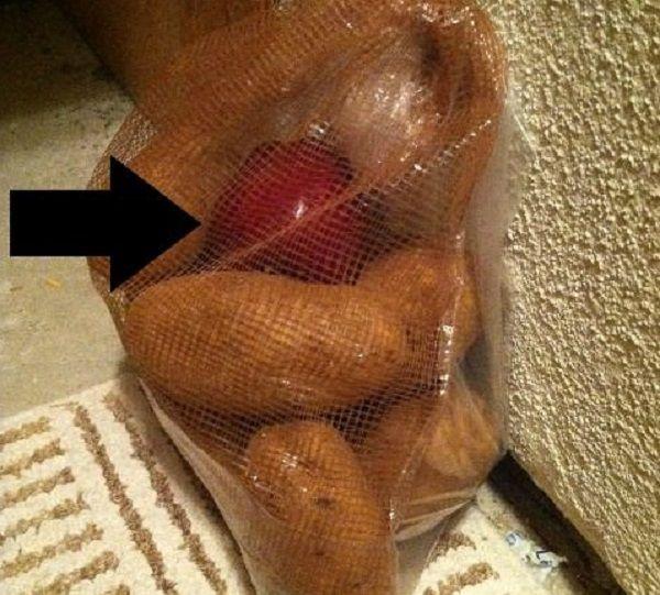 Conserver les pommes de terre web biollay - Conserver pommes coupees ...